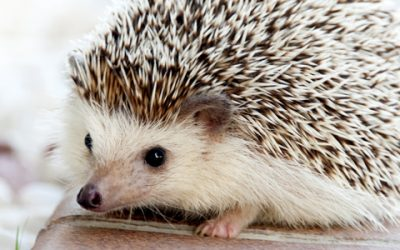 Hedgehogs and Such